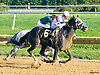 Swiss Confederate winning at Delaware Park on 10/12/16