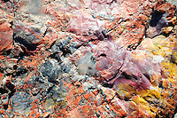Navajo County, Arizona – A close-up of a petrified log showing the colorful mineral details left by iron oxide and other substances combined with silica millions of years ago. This type of petrified wood give its name to the Petrified Forest.  The Petrified Forest National Park in northeastern Arizona remains one of the most popular attractions in the United States. The park attracts thousands of visitors a year for the large amount of petrified wood sediments from ancient trees. Photo by Eduardo Barraza © 2014