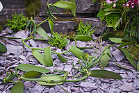 Vanilla planifolia beans orchid species commercial source of vanilla flavoring. Vine growing, long climbing plant, pods