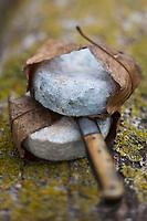 Europe/France/Poitou-Charentes/79/Deux-Sèvres/Arçais: Mothais sur Feuille , fromage de chêvre<br /> Le Mothais sur feuille est un fromage au lait de chèvre. Fromage à pâte molle à croûte naturelle. Il bénéficie d'un affinage spécifique, en mûrissant 4 à 5 semaines dans un climat particulièrement humide. La feuille de châtaignier qui l'enrobe lui permet ainsi de garder toute son humidité, en le parfumant légèrement d'arômes boisés.