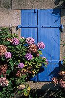 Europe/France/Bretagne/22/Côtes d'Armor/Ploubazlanec: Détail maison de pêcheur et hortensias