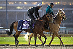 November 1, 2018: Well Done Fox (GB), trained by Richard Hannon, exercises in preparation for the Breeders' Cup Juvenile Turf Sprint at Churchill Downs on November 1, 2018 in Louisville, Kentucky. Alex Evers/Eclipse Sportswire/CSM