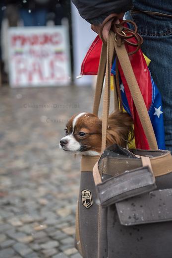 Ca. 150 Menschen protestierten am Samstag den 2. Februar 2019 in Berlin vor dem Brandeburger Tor gegen den venezolanischen Staatspraesidenten Nicolas Maduro Moros und forderten den selbsternannten Interimspraesidenten Juan Guaido als anzuerkennen. Sie bezeichneten den sozialistischen Praesidenten Madoru auf Transparenten und Plakaten als Schlaechter, Kriminellen und Diktator.<br /> Im Bild: Ein Demonstrant hat seinen Hund in einer Einkaufstasche mitgebracht.<br /> 2.2.2019, Berlin<br /> Copyright: Christian-Ditsch.de<br /> [Inhaltsveraendernde Manipulation des Fotos nur nach ausdruecklicher Genehmigung des Fotografen. Vereinbarungen ueber Abtretung von Persoenlichkeitsrechten/Model Release der abgebildeten Person/Personen liegen nicht vor. NO MODEL RELEASE! Nur fuer Redaktionelle Zwecke. Don't publish without copyright Christian-Ditsch.de, Veroeffentlichung nur mit Fotografennennung, sowie gegen Honorar, MwSt. und Beleg. Konto: I N G - D i B a, IBAN DE58500105175400192269, BIC INGDDEFFXXX, Kontakt: post@christian-ditsch.de<br /> Bei der Bearbeitung der Dateiinformationen darf die Urheberkennzeichnung in den EXIF- und  IPTC-Daten nicht entfernt werden, diese sind in digitalen Medien nach §95c UrhG rechtlich geschuetzt. Der Urhebervermerk wird gemaess §13 UrhG verlangt.]