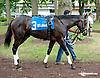 Stoupinator before The Forever Together Stakes at Delaware Park on 9/11/13