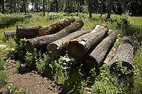 FOREST_LOCATION_90100