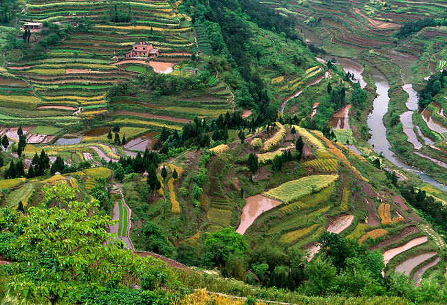 spring green and water, terrace farming in countryside near Wanxian, rural China, Asia