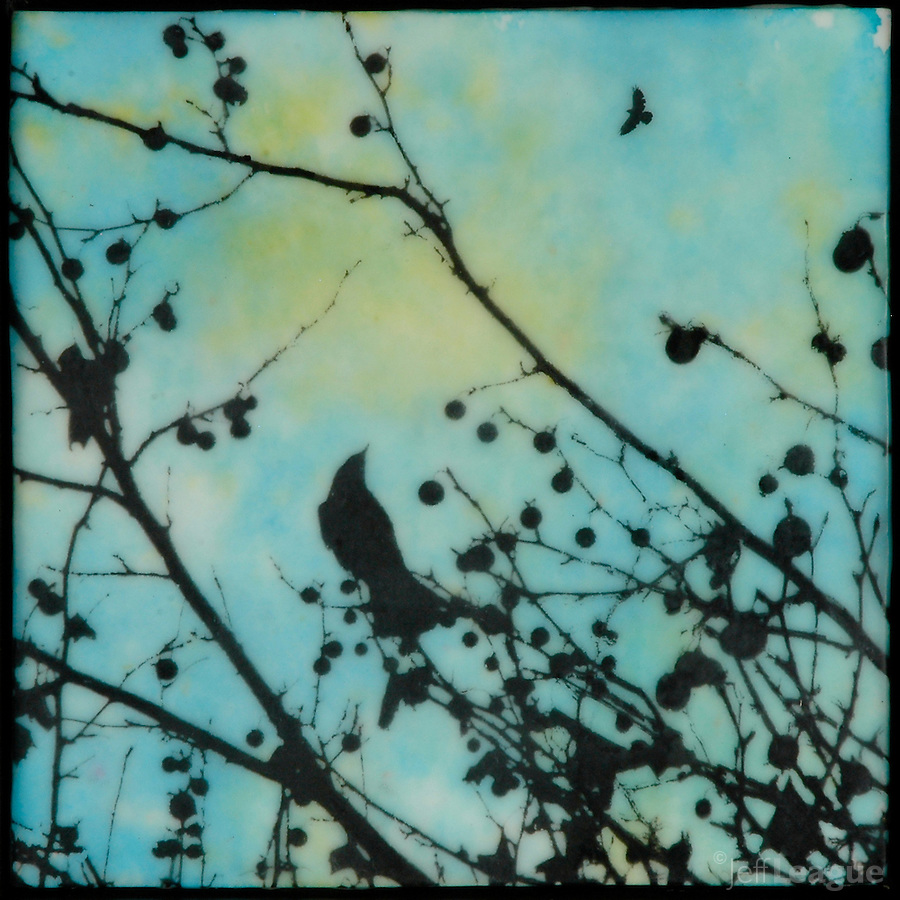 Mixed media encaustic painting with photography of bird in branches with brilliant turquoise sky.