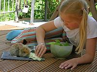 Zwergkaninchen, Zwerg-Kaninchen, Jungtier wird von Mädchen, Kind mit Salat gefüttert, dwarf rabbit