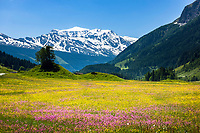 Austria (Salzburger Land - spring/summer/fall)