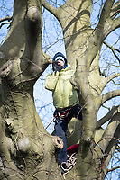 Pictured: A climate protester seen on a tree in Cardiff, Wales, UK.<br /> Re: A man was arrested following a stand-off between developers and climate change protesters over the felling of two 150-year-old trees in the Canton area of Cardiff, Wales, UK.<br /> More than 100 protesters gathered at Suffolk House on Sunday to stop the lime and copper beech trees being chopped down.<br /> An Extinction Rebellion campaigner chained himself to one of the trees, but he was later lifted down.<br /> A local man, aged 49, was arrested on suspicion of aggravated trespass.<br /> South Wales Police said on Monday morning that he remained in custody.