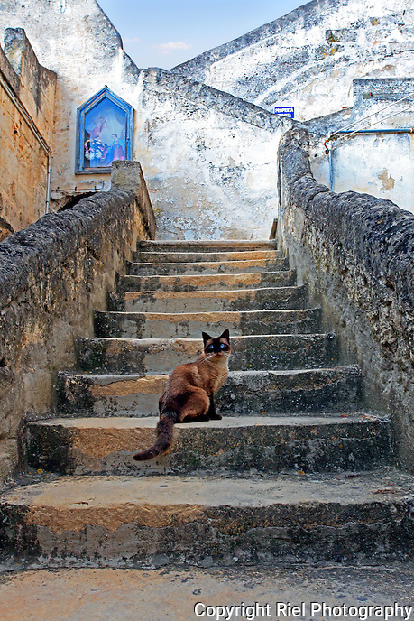 This masked Siamese cat paused to look at me while exploring the ancient town of Matera, Italy.