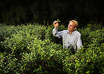 Jonathon Jones, garden director, in the tea plantation at the Tregothnan Estate, Cornwall.<br /> <br /> <br /> Commissioned by the GUARDIAN WEEKEND MAGAZINE. (See Tearsheets Gallery).