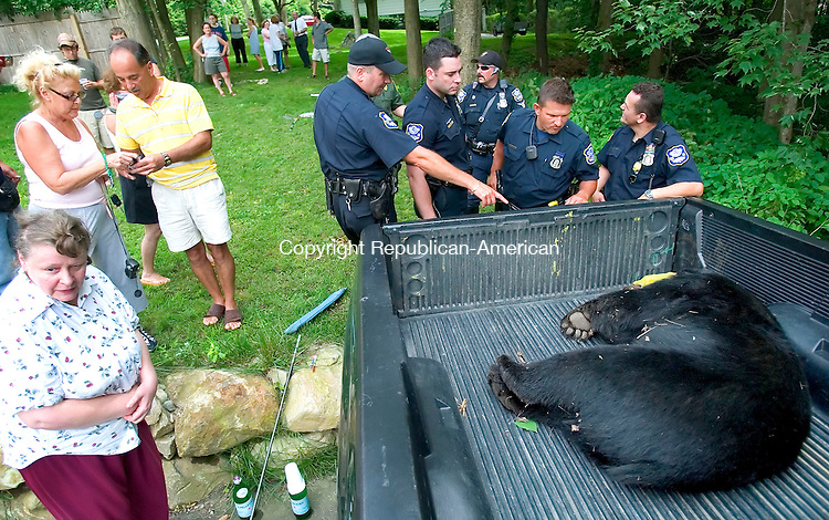 WATERBURY, CT. 20 July 2006--072006SV03--At right, Waterbury police officers check out a 315 lb, 5 year old bear the Department of Environmental Protection officers tranquilized for removal after the bear was eating bird feeders on Country Club Road in Waterbury Thursday. The bear was going to be moved to a less populated area.<br /> Steven Valenti Republican-American