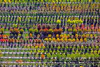 Baumschule: EUROPA, DEUTSCHLAND, NIEDERSACHSEN, BECKEDORF, (EUROPE, GERMANY), 13.10.2018: Europa, Deutschland, Niedersachsen, Beckedorf,  Nordheide, Baumschule, Baum, Baeume, bunt, gelb, Herbst, herbstlich, Pflanzen, Zucht, Reihe, Reihen, aufgereiht, aufgereihte, Pflanze, Baumpflanze, Baumpflanzen, Natur, Umwelt, Laub, Laubfall, Farbe, Luftbild, Luftbilder, Luftaufnahme, Luftaufnahmen, Uebersicht, Ueberblick, Vogelperspekte, Ordnung, ordentlich, System, systematisch