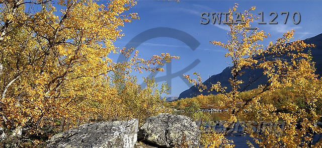 Carl, LANDSCAPES, panoramic, photos, autumn trees, rocks(SWLA1270,#L#)
