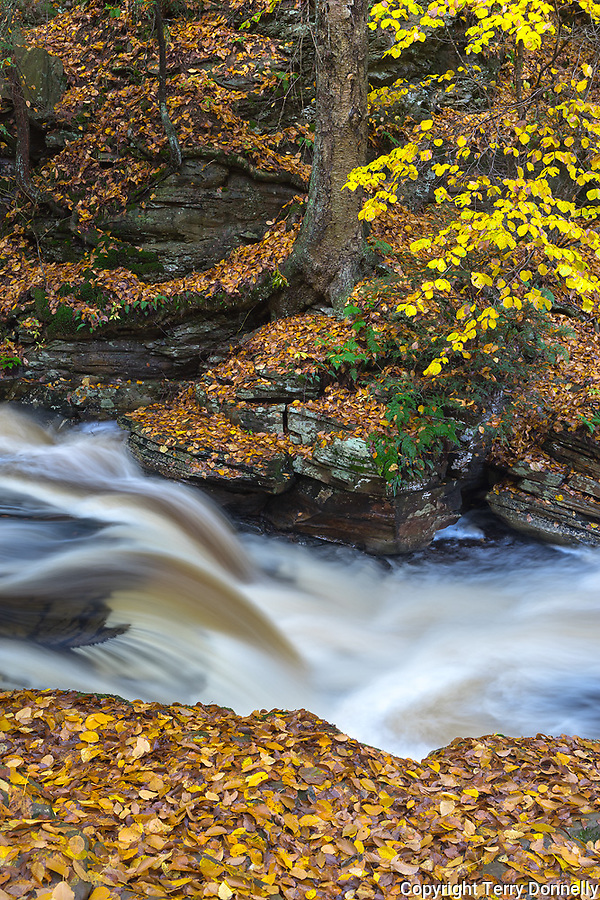 Ricketts Glen State Park, PA: Conestoga Falls on Kitchen Creek in autumn