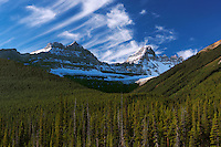Landscape of evergreen trees in Banff National Park, Canada