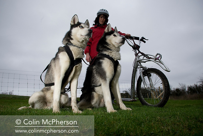 Debbie Pullen pictured on a sled with two Siberian huskies at her farm at Staintondale, north Yorkshire. In September 2006, Debbie and her husband Michael set up Pesky Husky Trekking, which allows visitors to their farm the experience of being pulled on a scooter by Siberian huskies either on a purpose-built training track or a nearby disused railway line. By diversifying their farming business they were aiming to make their farm more financially viable.