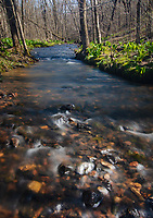 Otter Creek flows full with spring runoff through the forest at Baxter's Hollow State Nature Preserve, Sauk County, Wisconsin
