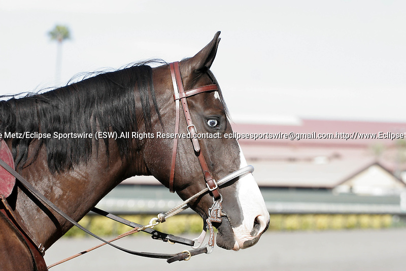 Scenes at Del Mar Race Course in Del Mar, California on July 28, 2012.
