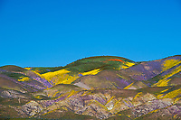 Superbloom at  Temblor Range at the Carrizo Plain in San Luis Obispo County. <br />