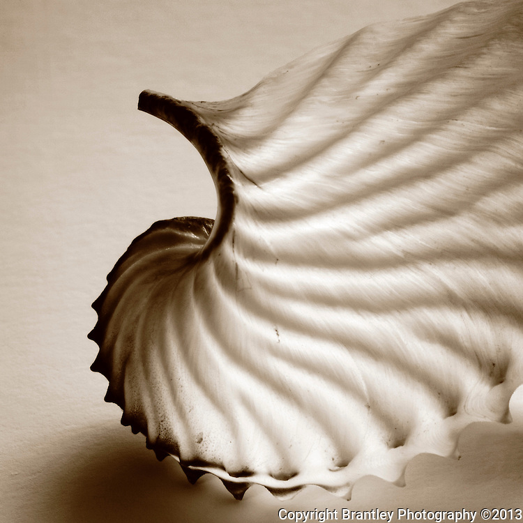 Fine art photography of Seashells