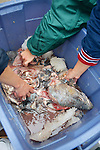 Bait For Sharks