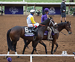 DEL MAR, CA - NOVEMBER 03: Forever Unbridled #6, ridden by John Velazquez, walks on the track prior to winning the Longines Breeders\'92 Cup Distaff on Day 1 of the 2017 Breeders' Cup World Championships at Del Mar Thoroughbred Club on November 3, 2017 in Del Mar, California. (Photo by Kazushi Ishida/Eclipse Sportswire/Breeders Cup)