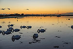 Rural scene at Bosham in West Sussex, England overlooking the estruary at dusk with swans