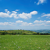 Scenic sheep pasture at Hay Bluff, near Hay-on-Wye, Brecon Beacons national park, Wales