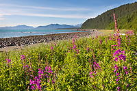 Gulf of Alaska, Pacific ocean coast, Glacier Bay National Park, Southeast, Alaska