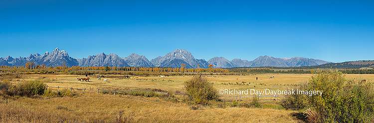 67545-09013 Horses and Grand Teton Mountain Range in fall,  Grand Teton National Park, WY