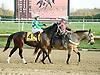 Alma d'Oro before The Brandywine Stakes at Delaware Park on 10/30/10