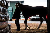 BALTIMORE, MD - MAY 16: Bob Baffert walks Kentucky Derby winner, Justify, after he arrives for Preakness preparations after a flight from Louisville, at Pimlico Race Course on May 15, 2018 in Baltimore, Maryland (Photo by Scott Serio/Eclipse Sportswire/Getty Images)