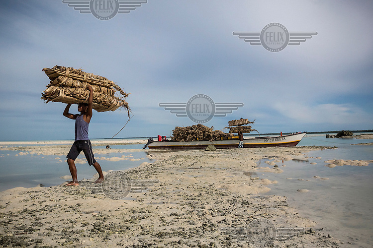 A worker carries a load of 'terau', dried coconut palms that are used for roofing.