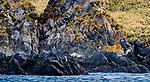 South Georgia Island (British Overseas Territory)