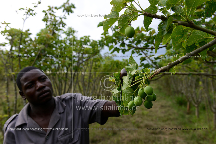 MOZAMBIQUE, Gondolo, BAGC Beira agricultural growth corridor, failed and abandoned 40 hectare Jatropha farm of Agro Pecuria de Manica LDA which was planted as biofuel project in 2010 at old portuguese cotton farm  / MOSAMBIK, Gondolo, BAGC Beira agricultural growth corridor, gescheiterte und aufgegebene 40 Hektar Jatropha Farm Agro Pecuria de Manica LDA, die 2010 als Biosprit Projekt auf einer alten Baumwollplantage gepflanzt wurde, Wachmann ALBERTO RICARDO