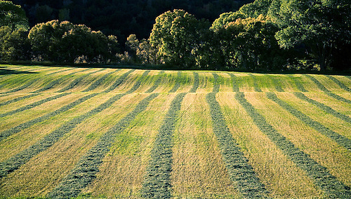 PARALLEL LINES APPEAR IN A FRESHLY CUT PLOT OF FARMLAND IN SOUTHERN UTAH