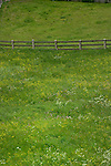 Farm fence and spring flowers in the picturesque district of Imst, Tyrol,Tirol, Austria.