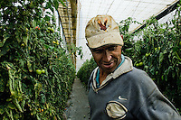 An immigrant from Morocco works in the greenhouse in El Ejido, Spain, 22 May 2007. El Ejido, a dry region on the coast of Andalusia, has changed during the last decades into the centre of vegetable production not only for the Spanish market. A half of Europe is supplied by tomatoes, peppers and melons from El Ejido. This economic miracle is from a major part based on a cheap labor force of illegal immigrants from Maghreb and Subsaharian Africa. Tens of thousands of workers keep the plastic sea of greenhouses running for the minimum wage of 30 Euros a day.