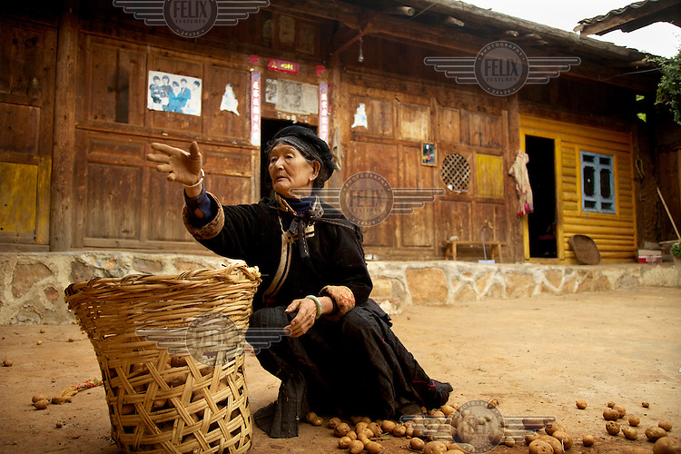 A woman fills a woven basket with potatoes. /Felix Features