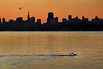 A brisk clear morning at sunrise bought out the seagulls and one brave soul for a cool morning swim off the shores of Sausalito.