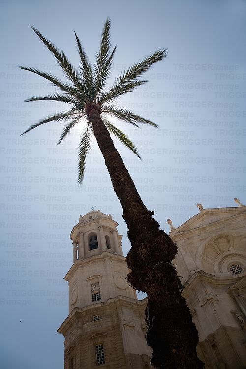 Low angle, backlighted image of Cadiz Cathedral behind a tall palm tree, Spain
