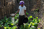 LAO P.D.R., province Oudomxay , village Houyta, ethnic group Khmu, project for water supply and sanitation by  CDEA, woman Ann watering her vegetable garden with waste water / LAOS, Provinz Oudomxay, Dorf Houyta , Ethnie Khmu , CDEA Projekt Wasserversorgung und sanitaere Einrichtungen fuer Bergdoerfer , Frau An bewaessert mit Abwasser ihren Gemuesegarten am Haus