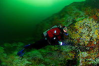 TA0454-D. scuba diver going with the flow, drift diving along current-swept wall covered with sea anemones and sponges in Sechelt Rapids, also called Skookumchuck Rapids, where the waters rush at more than 16 knots, making these the fastest navigable waters in North America. Long exposure results in motion blur creative effect. British Columbia, Canada, Pacific Ocean.<br /> Photo Copyright &copy; Brandon Cole. All rights reserved worldwide.  www.brandoncole.com