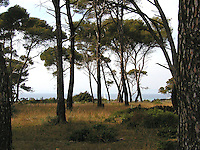 A sailboat is framed by trees on the island of Porquerolles in the Provence region of southern France.