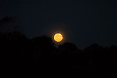 Aldeia Baú, Para State, Brazil. A big yellow moon over the rain forest.