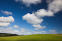 Grazing pastures under blue sky with cumulous clouds, North island, New Zealand