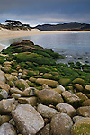 Algae covered rocks along the shoreline at Carmel River State Beach, Monterey Peninsula, California