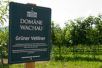 Austria, Lower Austria, UNESCO World Heritage Wachau, Domain Wachau, wine growing of Green Veltliner